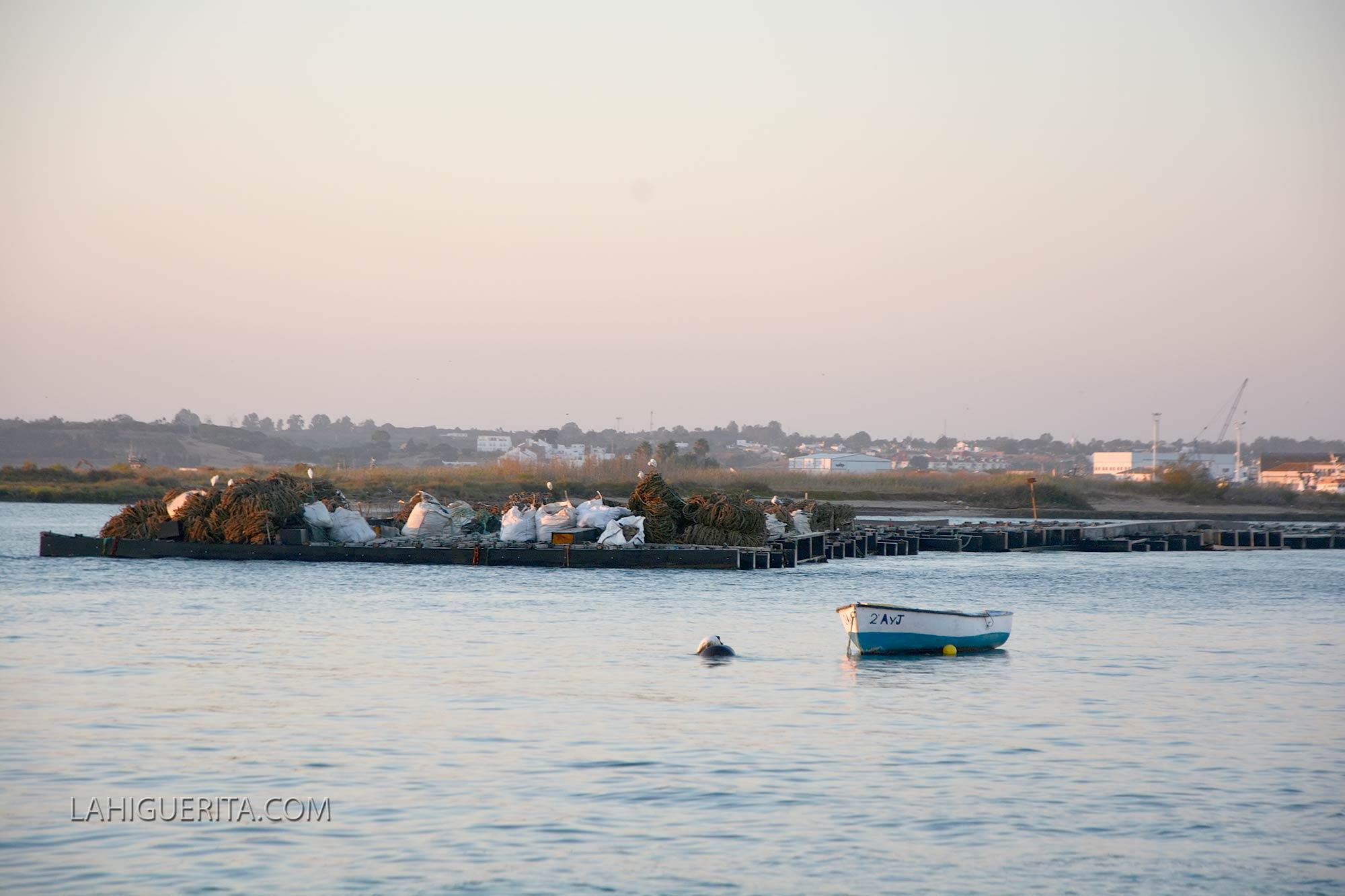 Autorizada la captura del mejillón en la zona de Isla Cristina