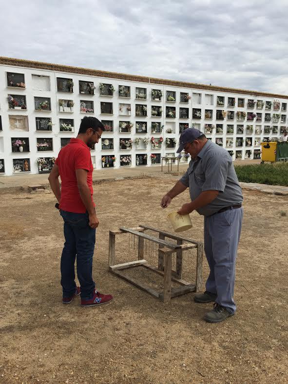 El Ayuntamiento realiza trabajos para erradicar los bandos de palomas de Cementerio Nuevo