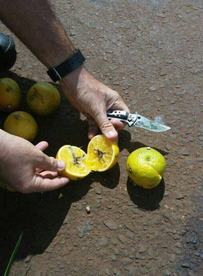 Cuidado, Frutas en la carretera con sorpresa