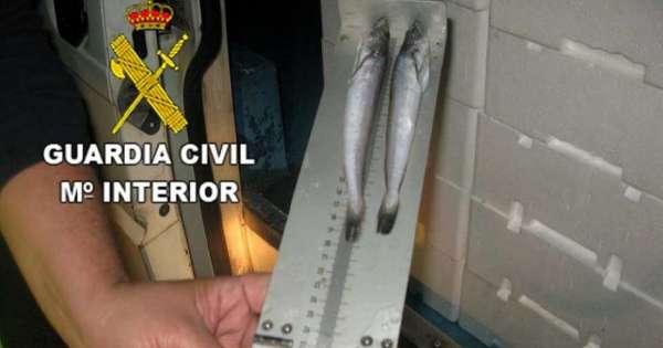 Incautado pescado inmaduro procedente de Isla Cristina