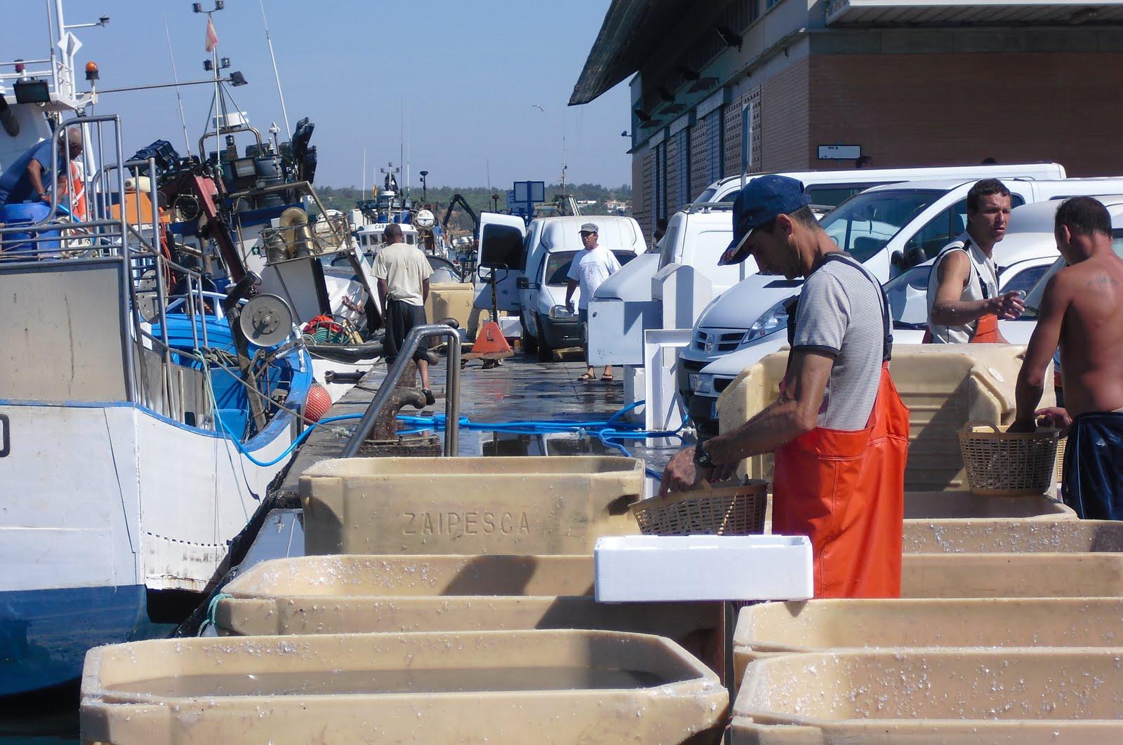 Celebrada las elecciones en las cofradías de pescadores de Ayamonte e Isla Cristina
