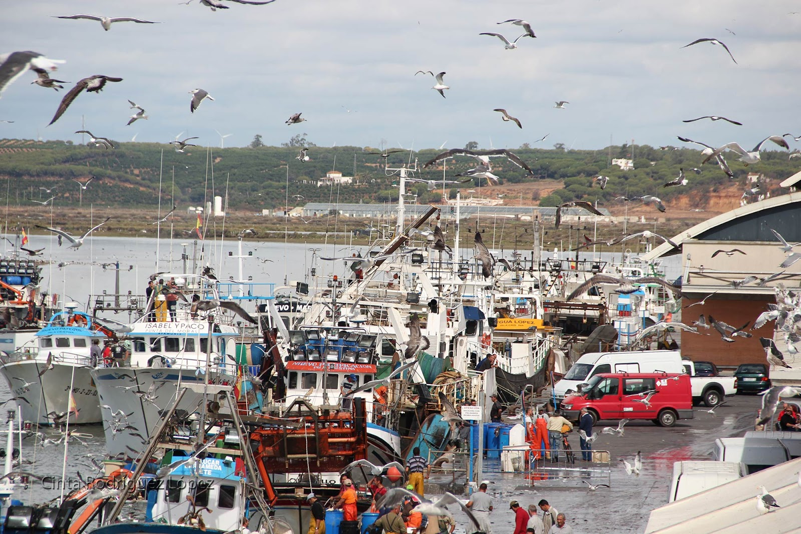 Isla Cristina y Punta Umbría exigen poder pescar más boquerón