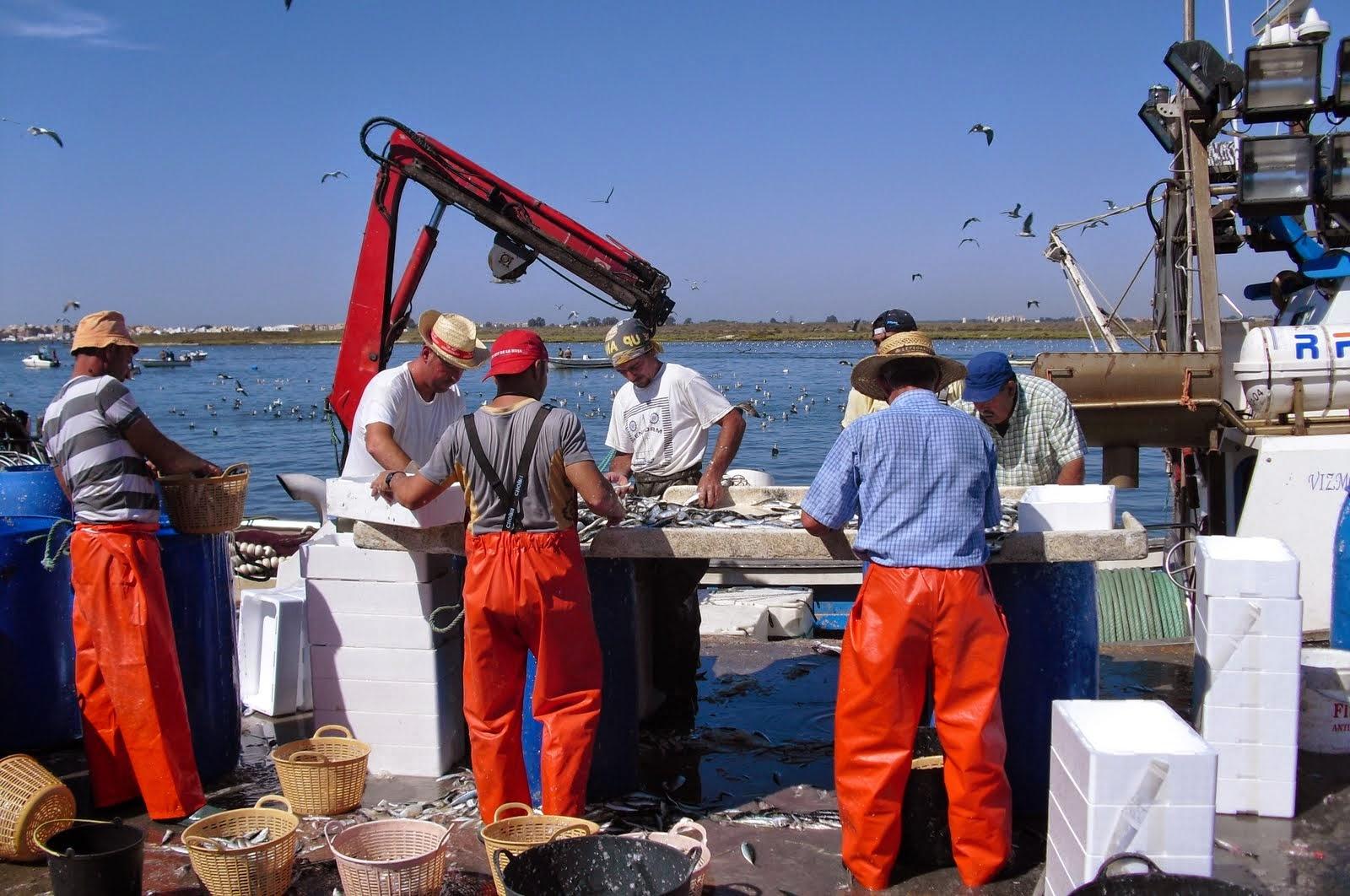 La flota del Golfo de Cádiz negocia el día 14 las cuotas de la sardina