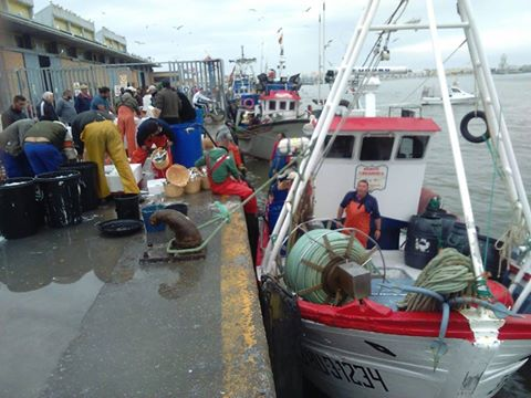 La mayoría de la flota pesquera permanece amarrada a puerto a causa del temporal