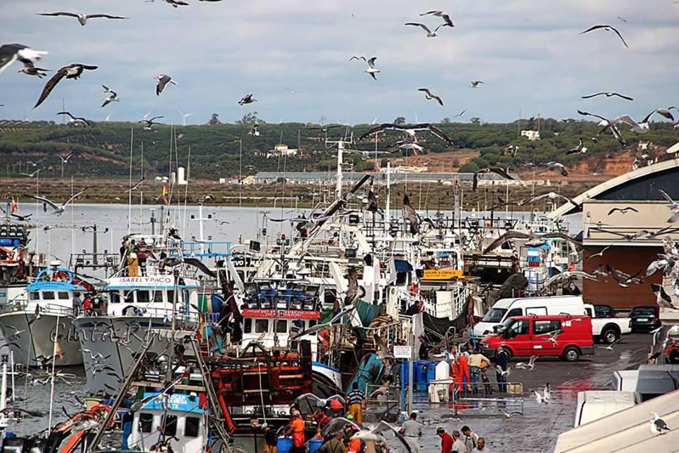 El reparto de la cuota del boquerón beneficia a la flota de Isla Cristina