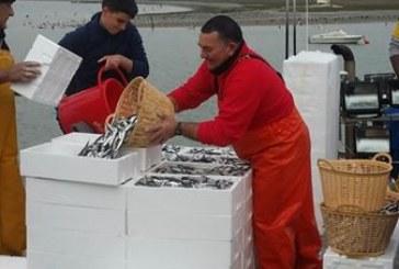 España y Portugal presentan un plan conjunto para la pesca de la sardina