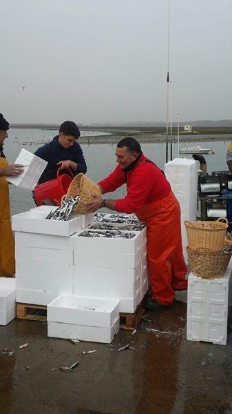 Los barcos de cerco de Isla Cristina retoman la pesca de la sardina en el Golfo de Cádiz