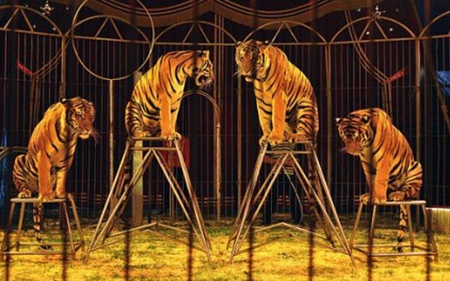 vitoria-prohibe-circo-con-animales
