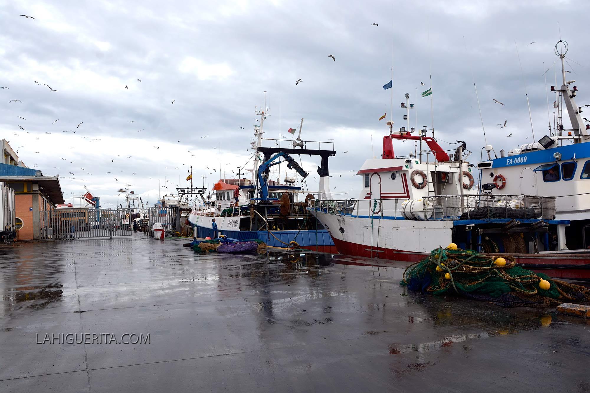 Isla Cristina y Punta Umbría retrasan la pesca de la sardina hasta el verano