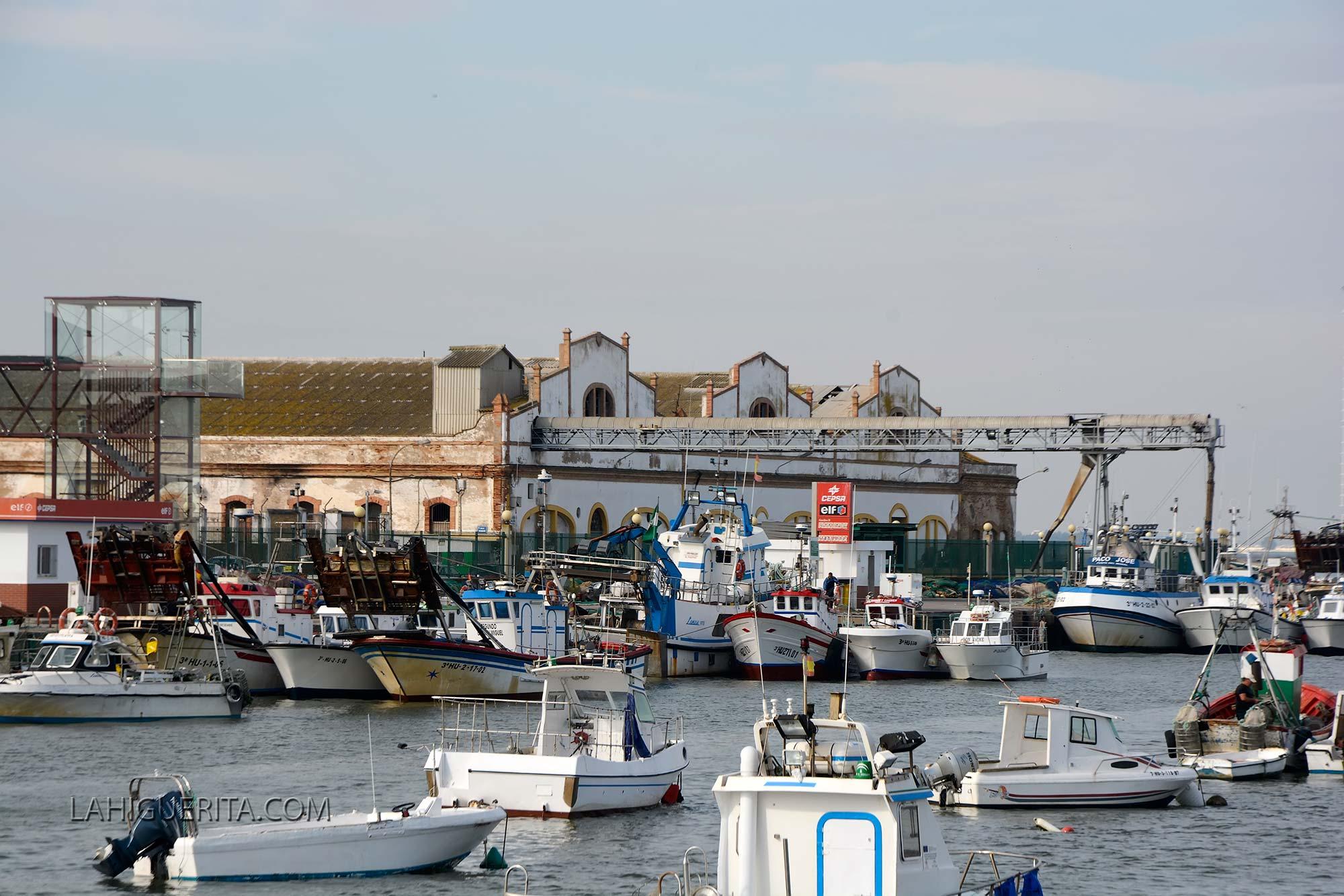 Comienza la parada biológica de la chirla para la flota isleña en el Golfo de Cádiz