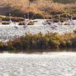 Medio Ambiente celebra el Día Mundial de las Aves con un Safari fotográfico en las Marismas de Isla Cristina