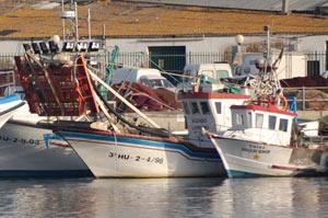 La lonja de Isla Cristina denuncia que los pesqueros de la chirla no puedan faenar