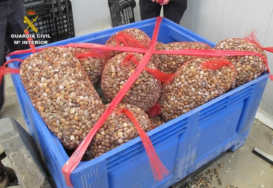 Junta y Guardia Civil se incautan de 8.000 kilos de pescado inmaduro o sin etiquetar desde principios de verano