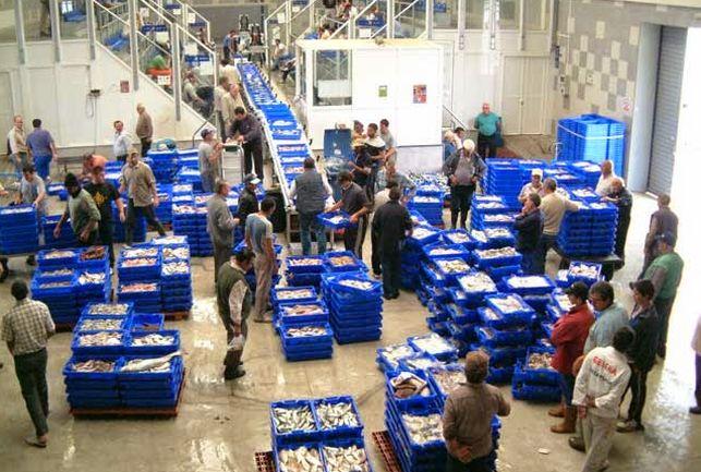 """La lonja de Isla Cristina vuelve a sobresalir como """"el máximo referente"""" de la pesca andaluza"""
