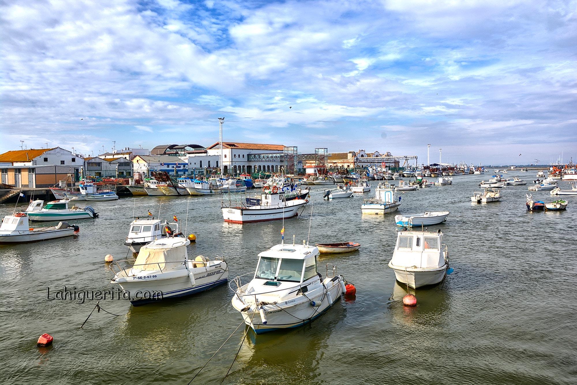 El Golfo de Cádiz recupera el 60% de la población de la chirla tras la veda