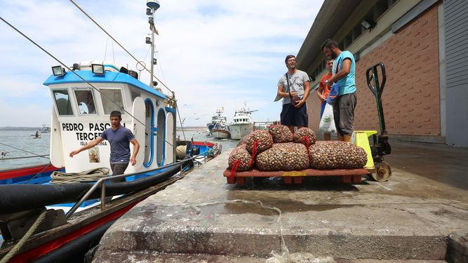 La Junta responde a los mariscadores de chirla tras la carta mandada por la madre de dos marineros de Isla Cristina a la directora general de Pesca y Acuicultura