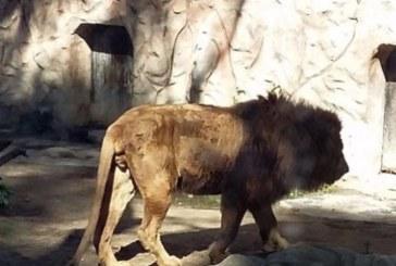 Denuncian la desnutrición y condiciones lamentables de los animales en el zoo de Ayamonte