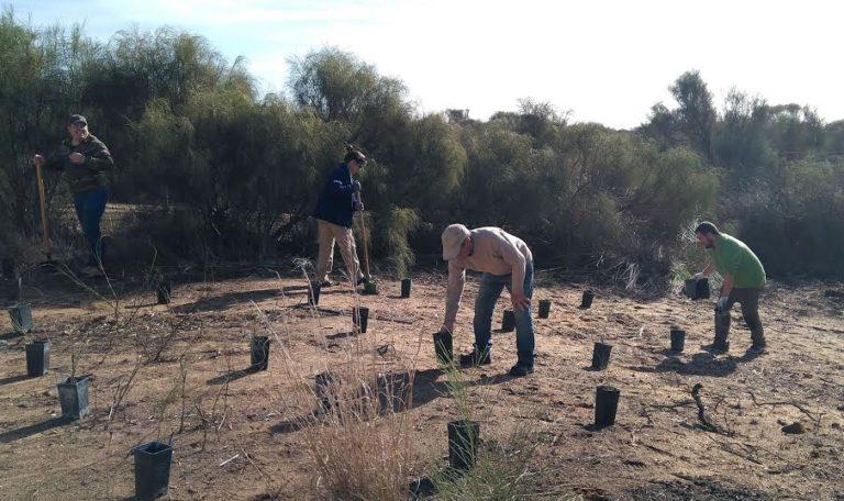 Acción de Voluntariado Ambiental para la regeneración del Sistema Dunar de Islantilla